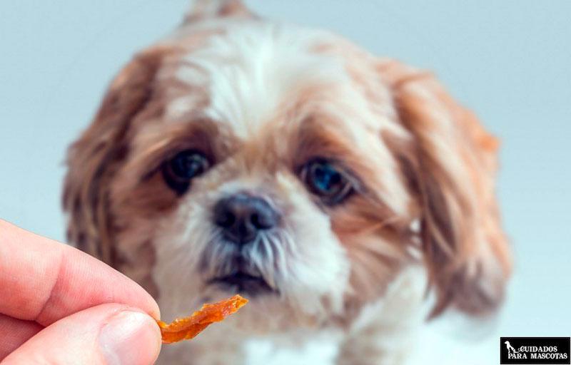 Perrito pequeño comiendo golosina