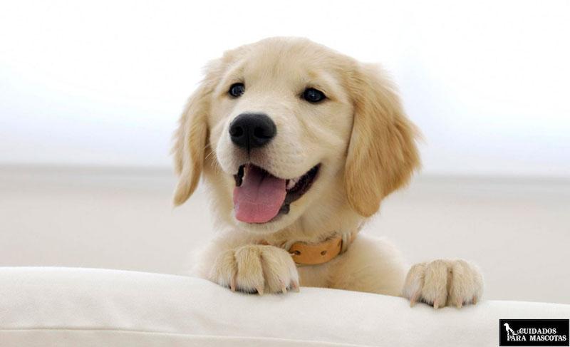 Acidos grasos omega para cachorros