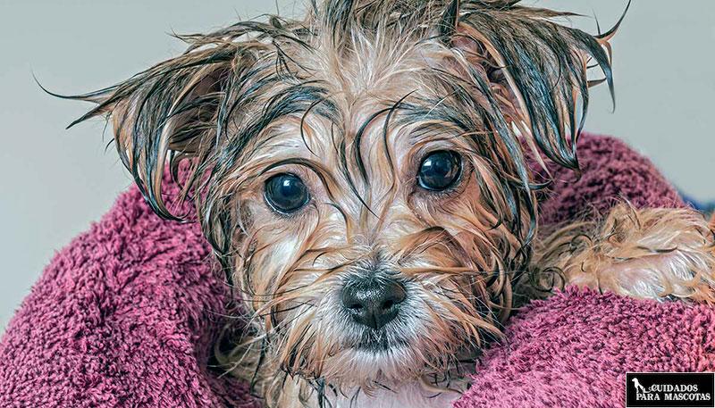 Se puede bañar a un cachorro