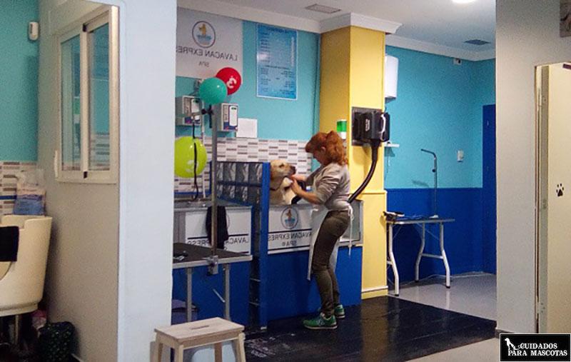 Centro de lavado de perros profesional