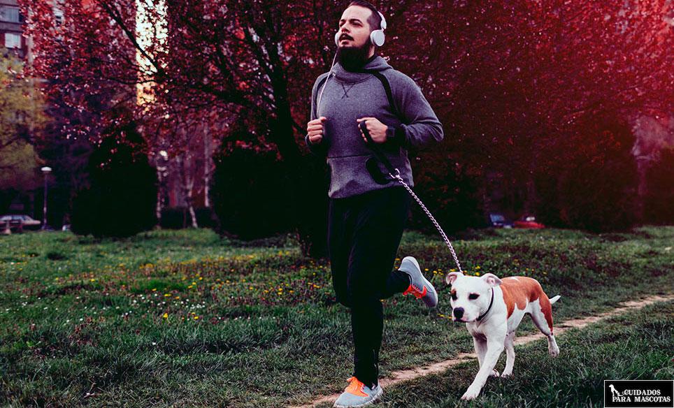 Consejos para salir a correr con tu perro