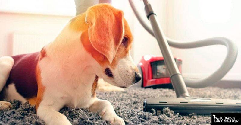 Evita que tu perro pierda pelo