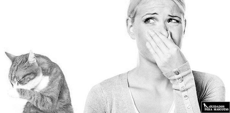Aprende a evitar el mal olor del arenero de tu gato