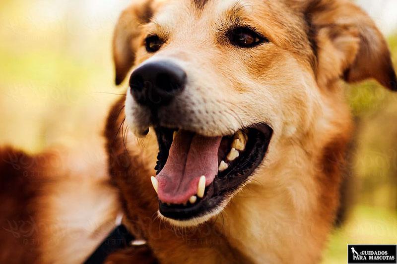 Suplementos de omega para tu perro