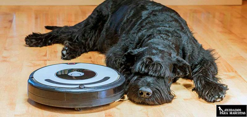 Roomba para limpiar los pelos de tu perro