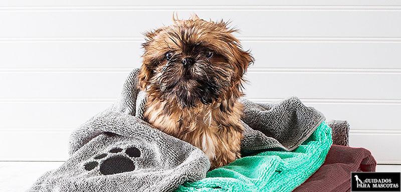 Seca a tu perro con toalla para un mejor resultado