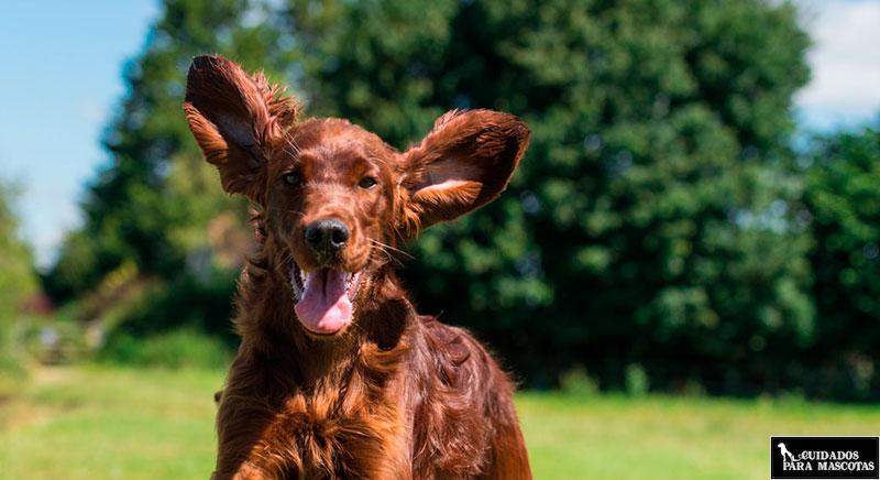 Suplemento para perros de omega-3