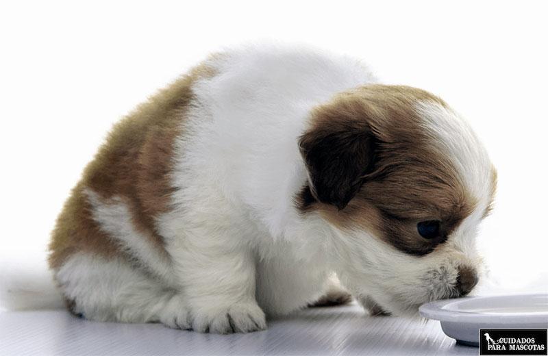 Los mejores piensos para perritos pequeños