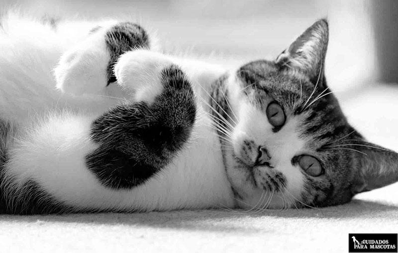 Ayuda a tu gato a superar su enfermedad renal