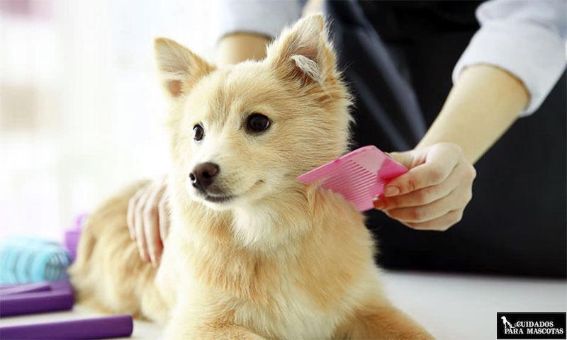 Cepilla a tu perro a diario en invierno