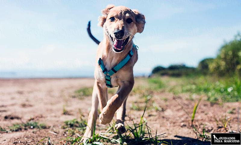 Los condroprotectores son ideales para perros con alta actividad física