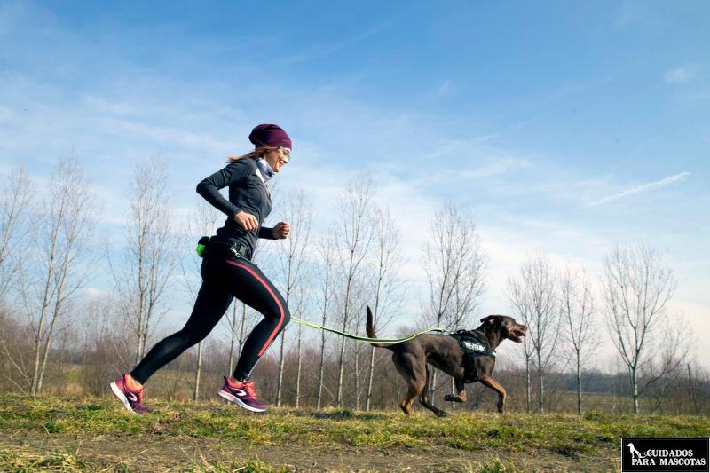 Corre con tu perro y un arnés Julius K9
