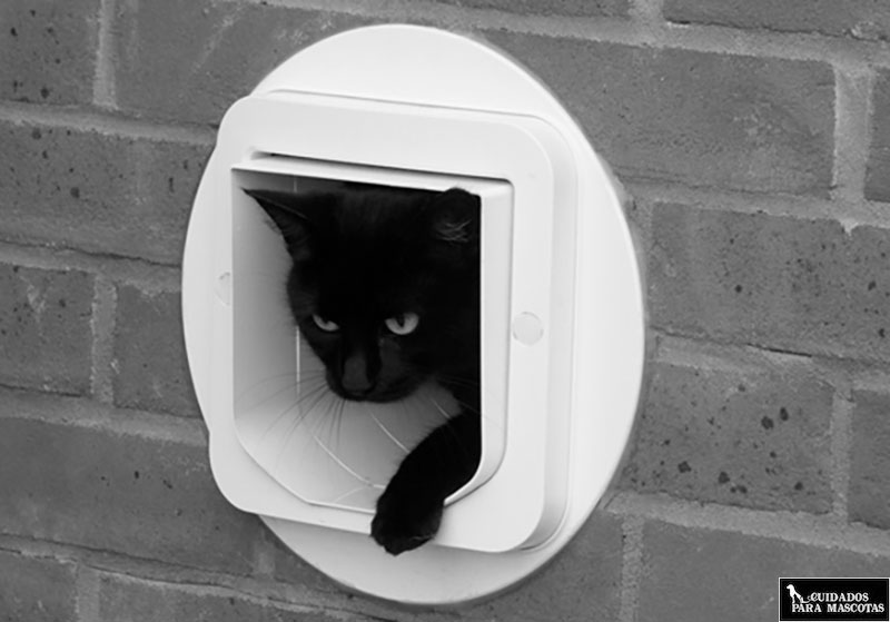 Gatera instalada en una pared para tu gato