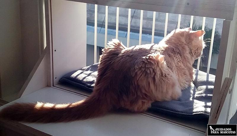 No apliques Feliway en ventanas
