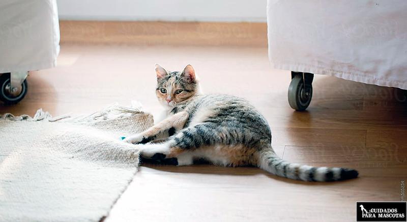 Feliway consigue que tu gato no arañe los muebles