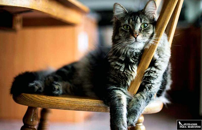 Feliway mejora el bienestar de tu gato