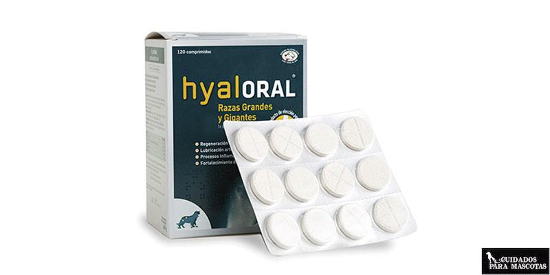 Hyaloral, un condroprotector para perros clínicamente probado