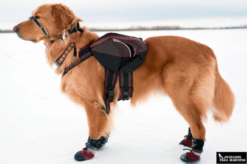Equipa lo mejor posible a tu mejor amigo para los paseos