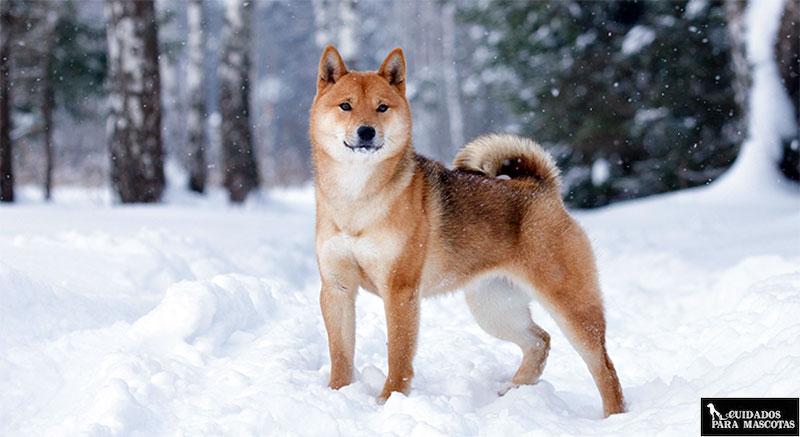 Perro en forma en la nieve