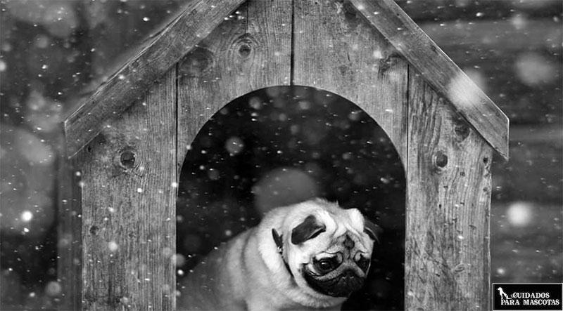 Consejos para tu perro si vive en exterior
