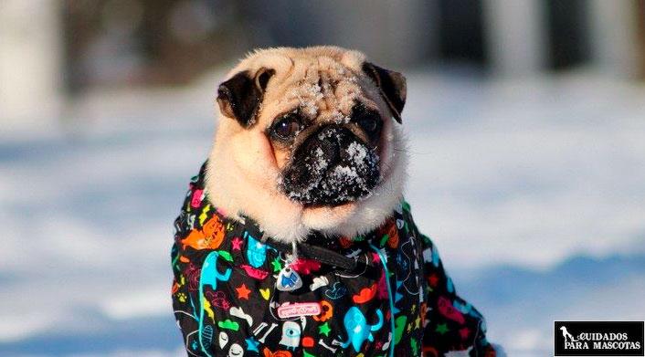 Abriga a tu perro en invierno