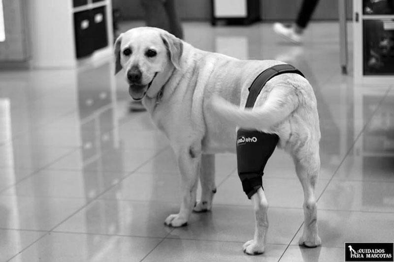 Condroprotectores para lesiones en perros
