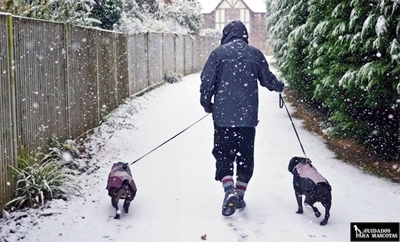 Logra que tu perro esté cómodo en invierno saliendo a pasear