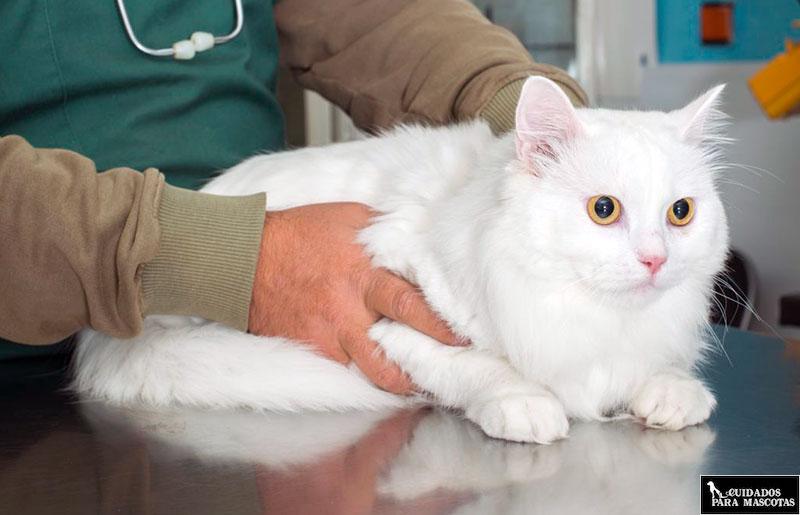 Visita al veterinario para prevenir enfermedades renales