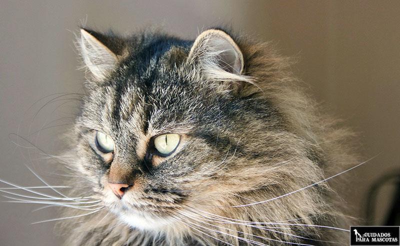 Recuerda la importancia de los antiparasitarios para gatos
