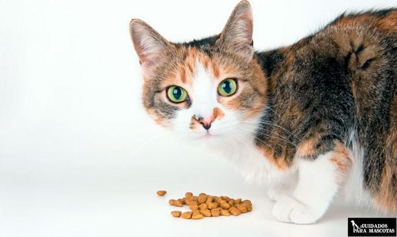 Mejores cereales para la comida de los gatos