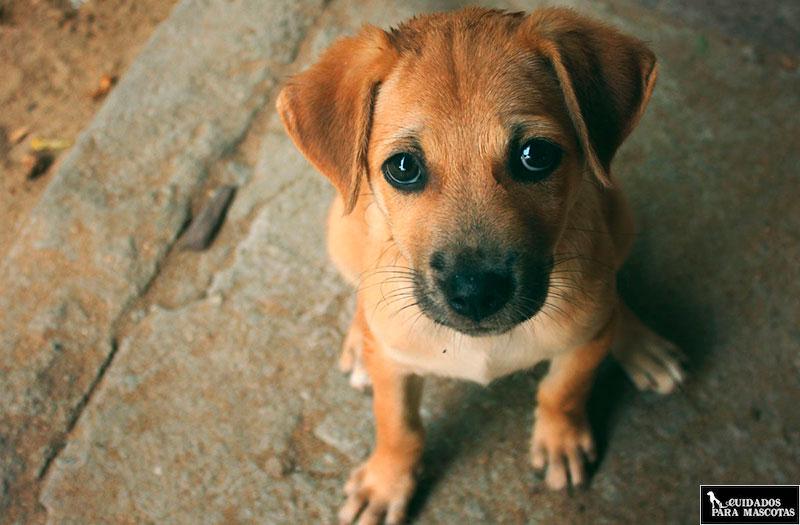 Desparasitación interna para perros