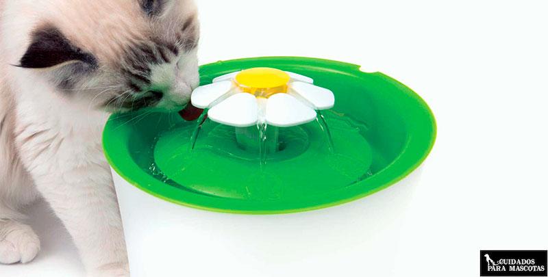 Vigila la ingesta de agua en tu gato