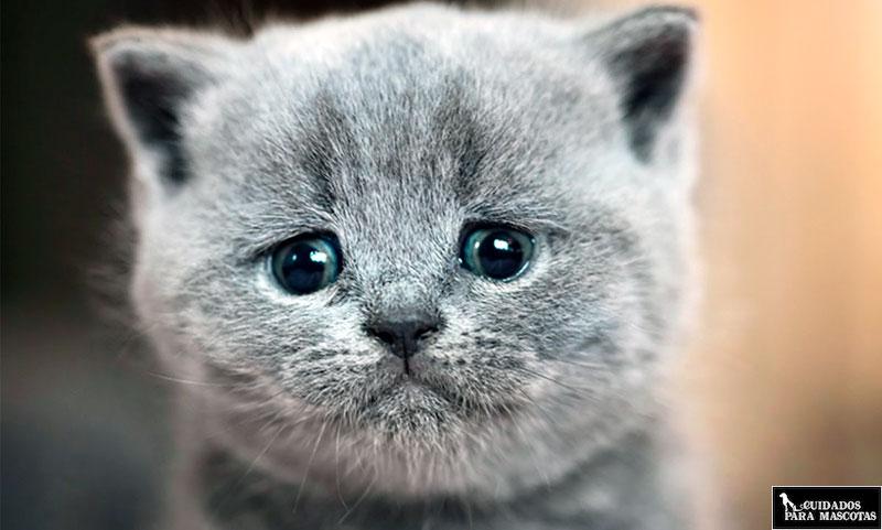 Antiparasitarios para gatos con el fin de evitar ascárides