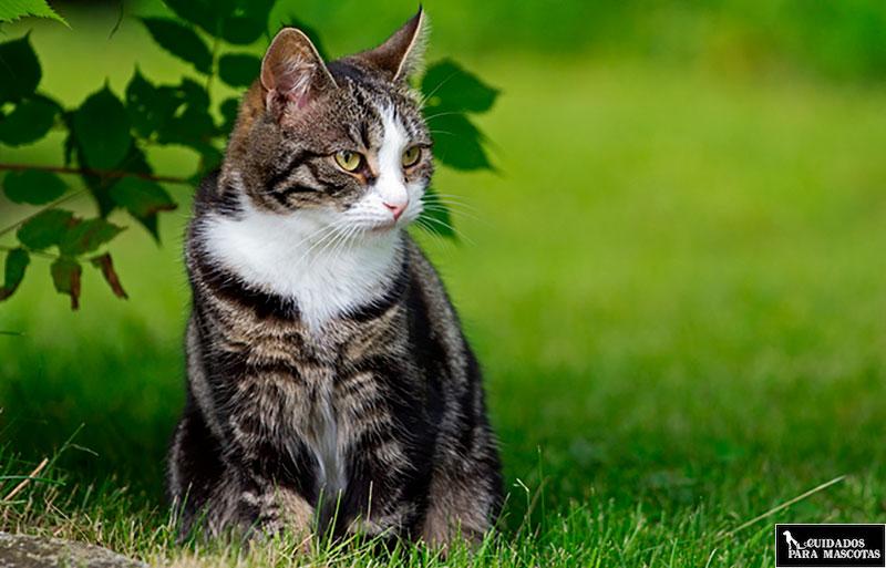 Los gatos en exteriores son propensos a tener parásitos