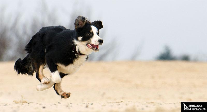 Beneficios de los condroprotectores en perros