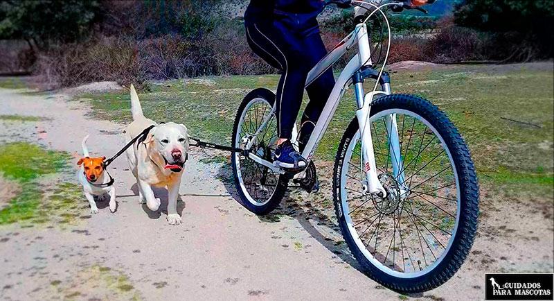 Correa flexible para pasear perro en bici