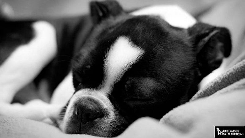 Evita que tu perro pase frío por las noches