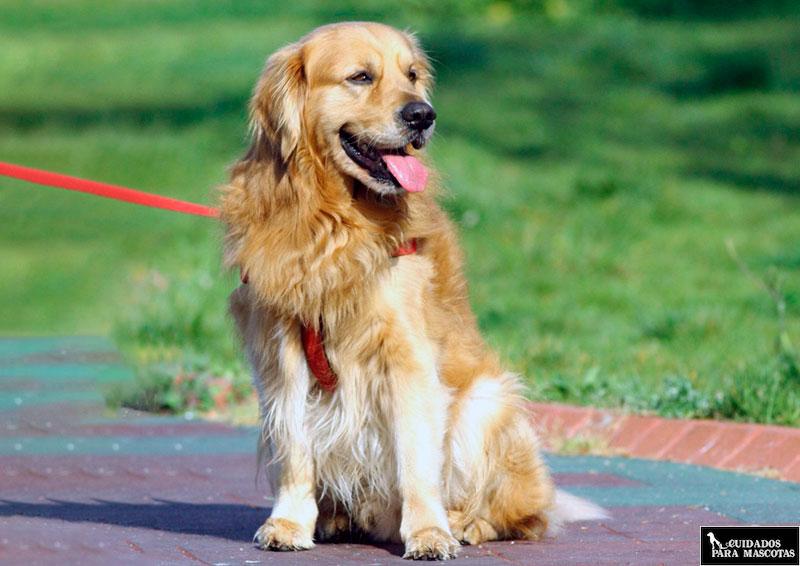 Mantén la calma de tu perro al pasear