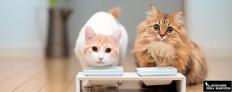 Piensos para gatos naturales