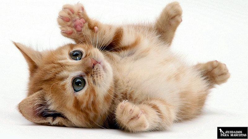 Importancia de las vitaminas y minerales en gatitos de corta edad