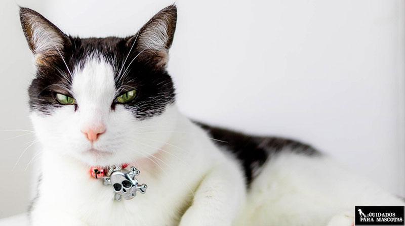 Acidos grasos omega en gatos