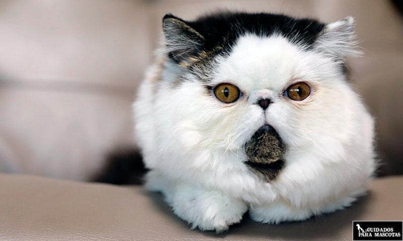 Minerales y vitaminas en gatos