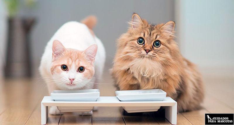 La salud de tu gato depende de los minerales