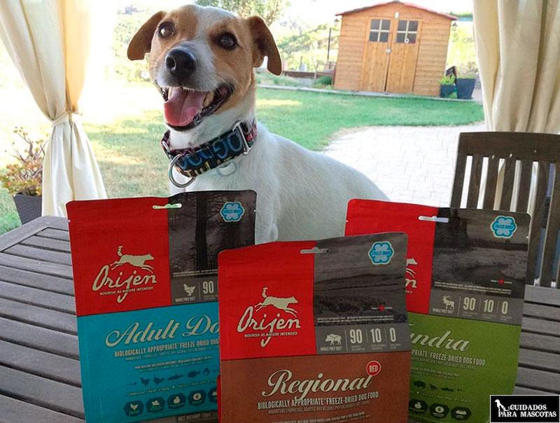 Acierta con Origen al escoger un buen pienso para tu perro