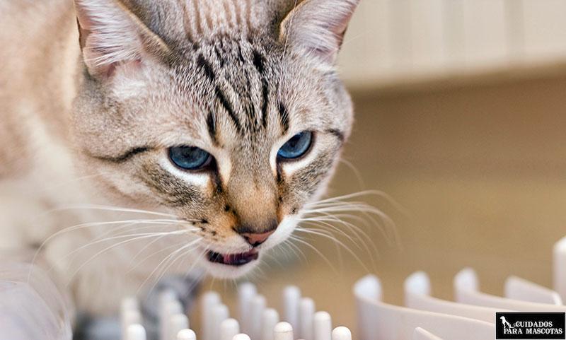 Vitaminas y minerales para gatos