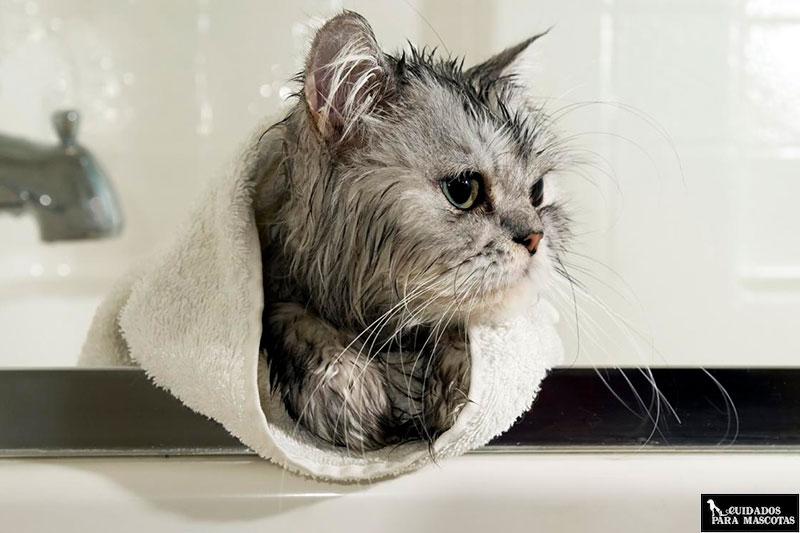 Baña a tu gato con tranquilidad