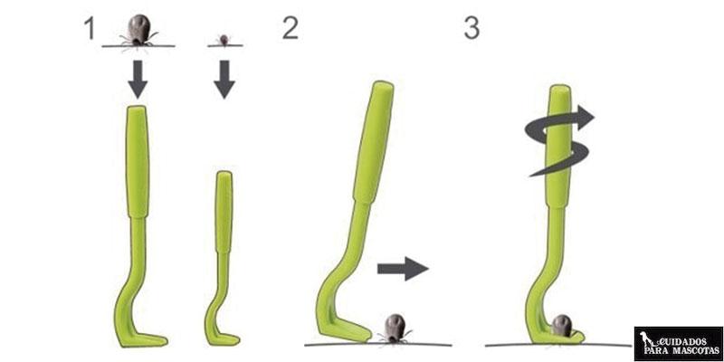 cómo quitar una garrapata con éxito