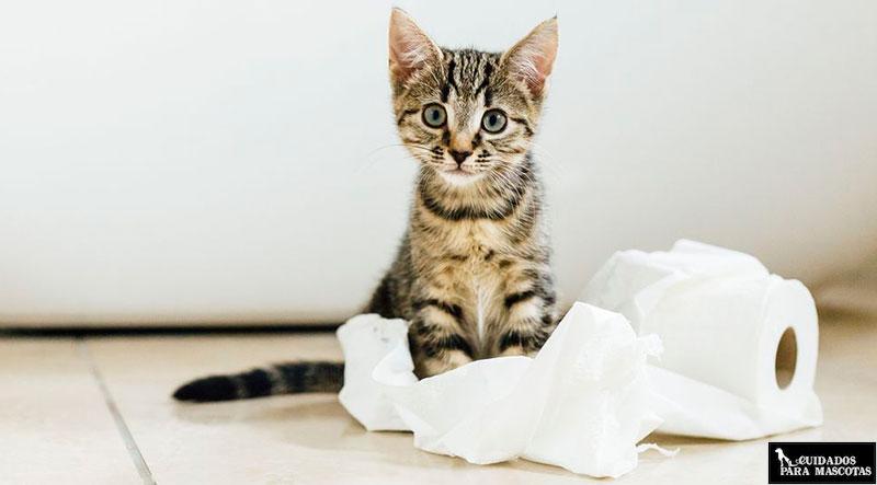 Truco para eliminar el olor a pis de gato