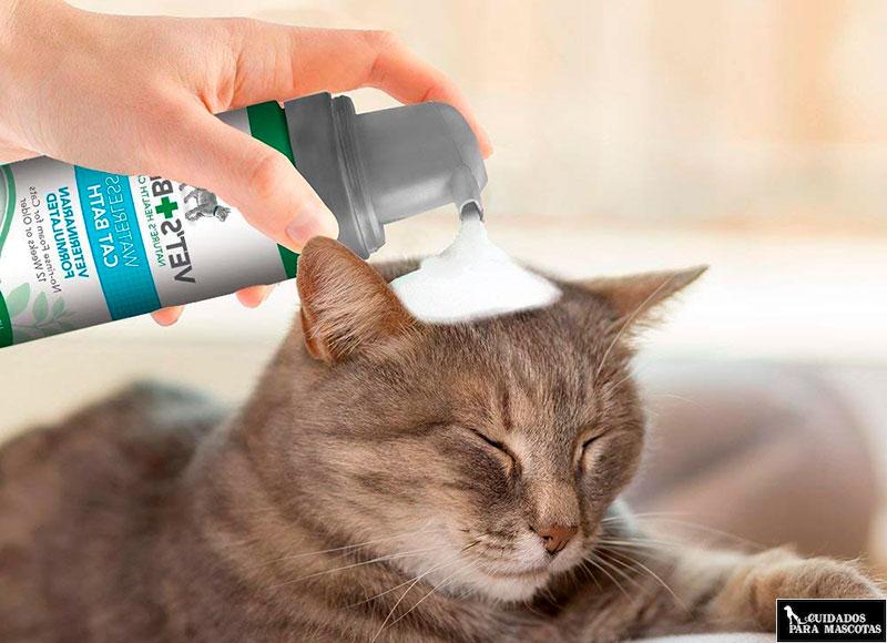 Limpieza con espuma en seco