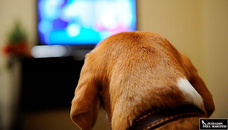 Evita que tu perro ladre cuando no estás en casa con la TV